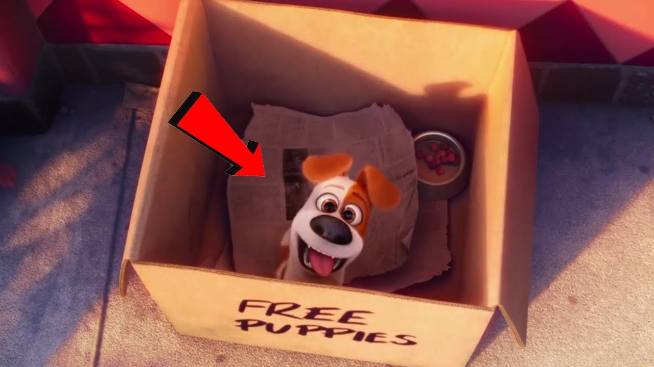 Download The Secret Life of Pets (2016) - Where does Max come from???