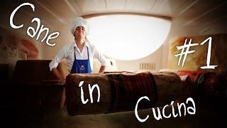 Cane in Cucina #1 - Cane Secco