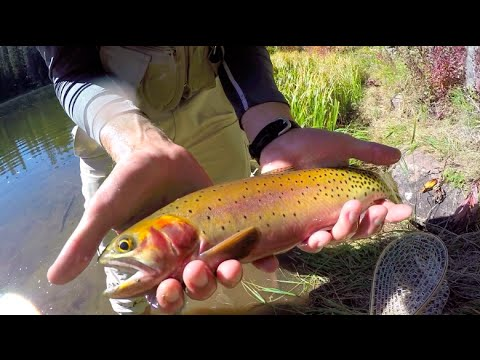 Colorado Wickedfisha- S1E8:  Fall Camping & Cutthroat In The Maroon Bells Wilderness