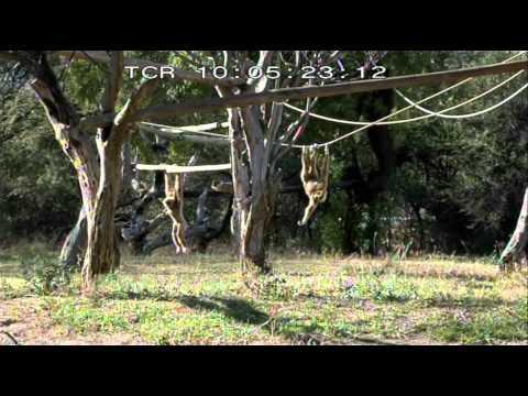 Vidéo Documentaire France 5 Un jour au zoo