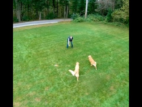 tangle-free-dog-tie-outs-for-two-dogs---double-dog-run-&-k9compass---best-two-dog-tie-out