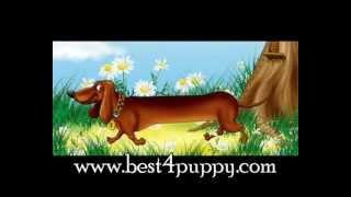 Такса - Выбор породы собаки - характер, дрессировка.