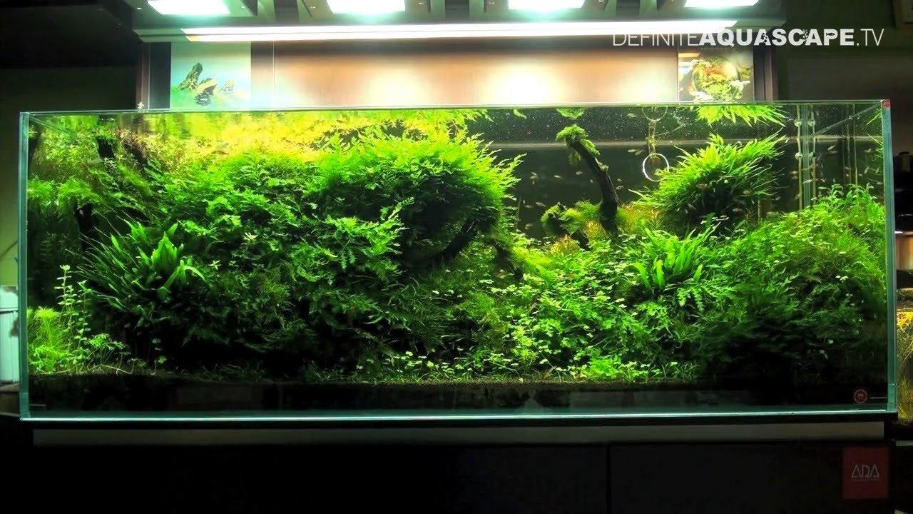 Aquascaping - Planted aquariums of roslinyakwariowe.pl ...