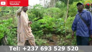 Buzz au Cameroun : projet agriculture