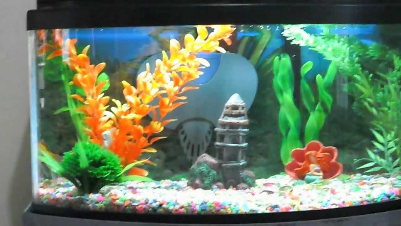 Acuario 40 litros youtube for Peces artificiales para acuarios