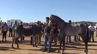 Feria y  Fiestas  de Zalamea Sna  - Rodeo-2016