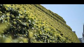 Die größte grüne Fassade Europas - Kö Bogen II in ...
