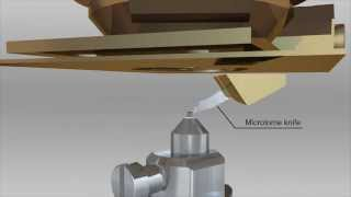 ZEISS MERLIN 3View and SIGMA VP 3View - SBF-SEM/SBEM Workflow Animation