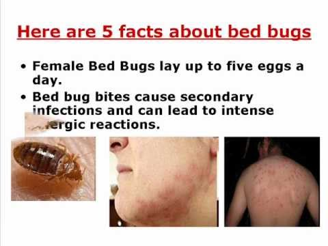 Where Do Bed Bugs Come From Youtube