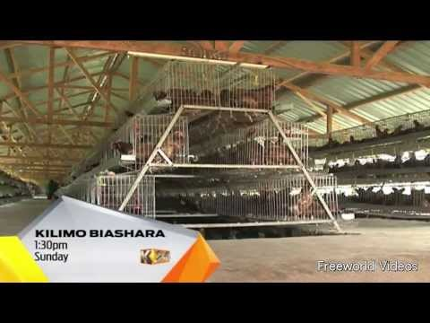 KILIMO BIASHARA Sunday 23rd August