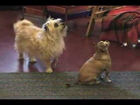 Bloopers and ending of Dog Tricks
