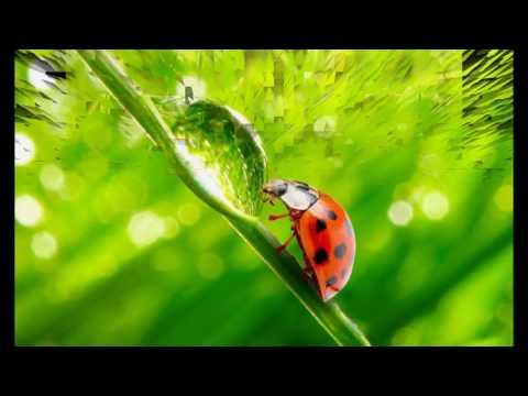 Красивая музыка с картинками Роса на траве
