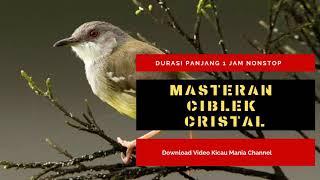 Masteran Ciblek Kristal Durasi Panjang   Suara Masteran Burung Ciblek Kristal mp3