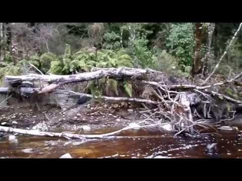 gold Prospecting Slab Hut Creek  25/8/2016