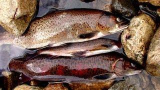 Забайкалье. Рыбалка на Каларе.