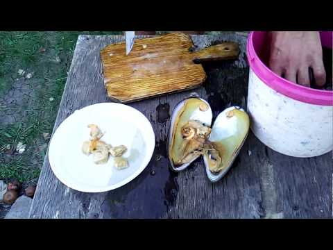 Как чистить, разделать двухстворчатый моллюск. How to clean oysters, shellfish, mussels.
