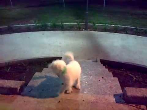 Jumping happy dog