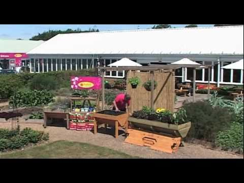 How to Plant a Vegetable Trug