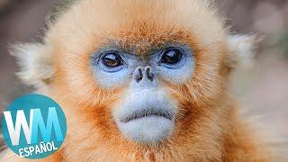 ¡Top 10 Animales QUE NO SABÍAS QUE EXISTÍAN!