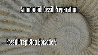 Cleaning an Ammonoid Fossil