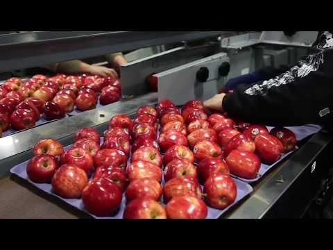 apple processing in shopian kashmir
