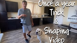 Learn how to train and fix tricks using Shaping.