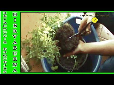 Como trasplantar y hacer esquejes de tus plantas en maceta for Varias plantas en una maceta