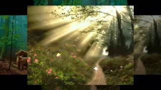 Video Morning in the forest... ...(music Ernesto Cortazar)... ... download MP3, 3GP, MP4, WEBM, AVI, FLV Juli 2018
