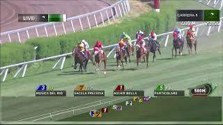 Vidéo de la course PMU PREMIO TOSCHCA