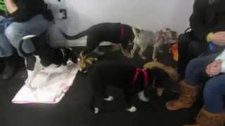 Reward That Puppy Dog Training - Lst Day Of Puppy Class