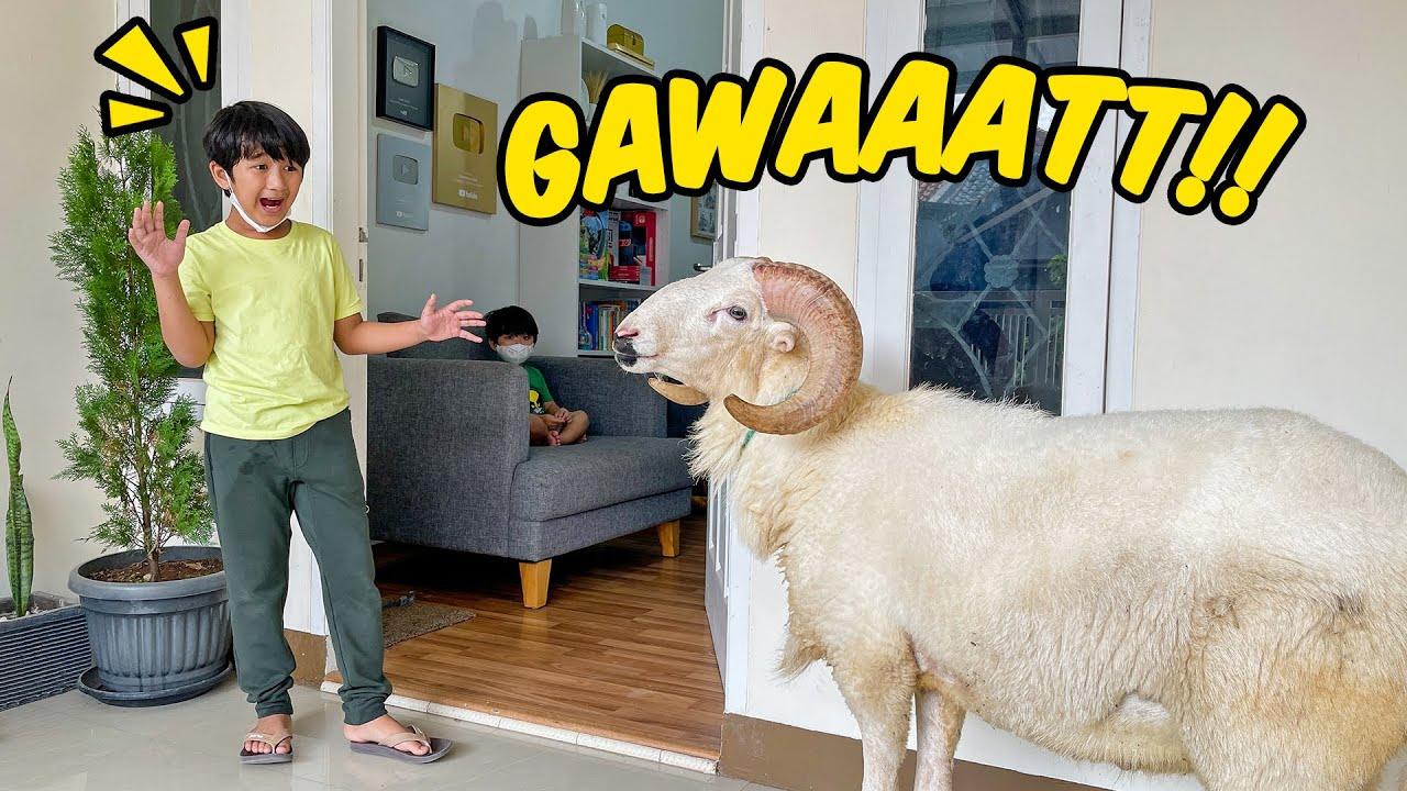 GAWAT!! Ada Kambing Mau Masuk Rumah Ziyan