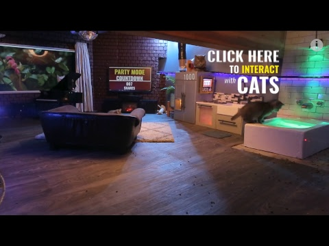 Jazz Cats Livestream 2/22 - Go here to interact with the set!