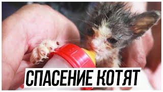 Спасение котят // КОТЯТА НА МУСОРКЕ