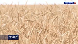 Специальный репортаж. Рекордный урожай – 2020. 02.11.20