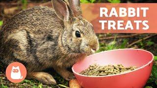 TREATS and SNACKS for RABBITS 🐰🍓