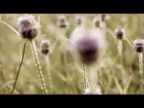 Mastifal - Flores Muertas (Video Oficial)