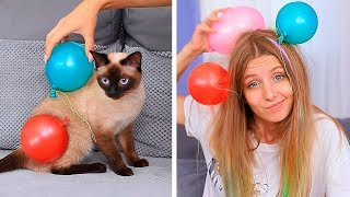 17 Funny Pet Pranks And Hacks