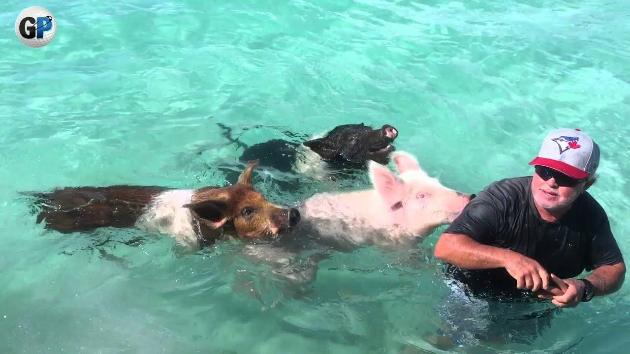 Pig Beach The Bahamas You