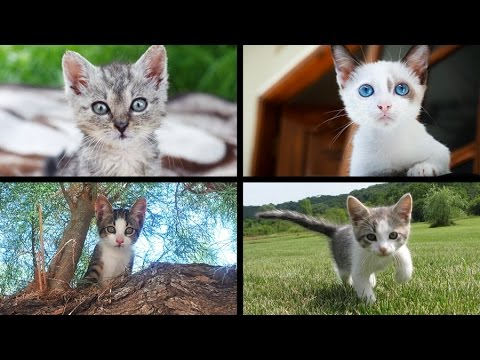 Slideshow of 25 adorable Kittens (Gattini) Jack Animals