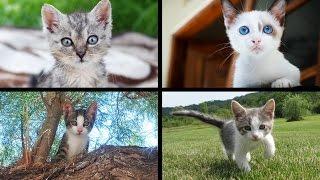 Slideshow of 25 adorable Kittens (Gattini) Jack Animals
