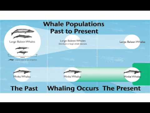 Are Antarctic Minke Whales Unusually Abundant?