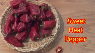 Sweet Heat Pepper