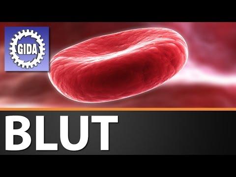 GIDA - Blut - Biologie - Schulfilm - DVD (Trailer) - YouTube