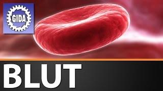 GIDA - Blut - Biologie - Schulfilm - DVD (Trailer)