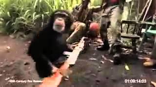 Mono con metralleta en áfrica