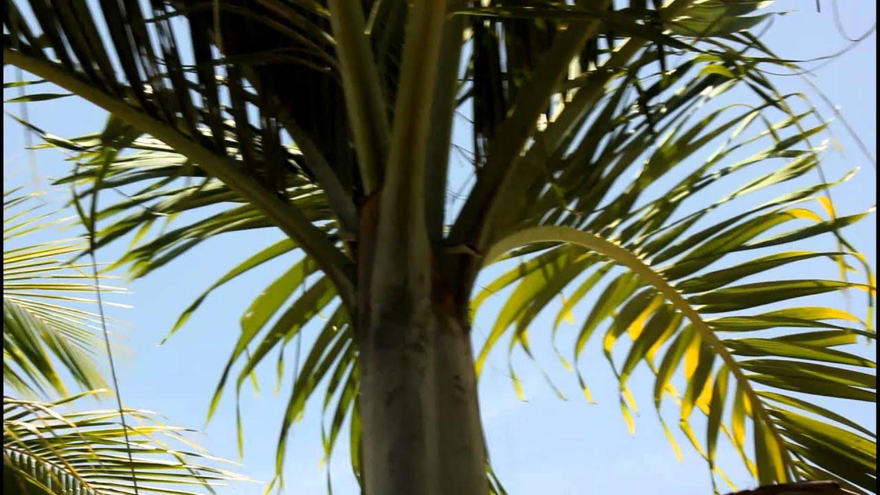 Paradise Tree Snake Youtube