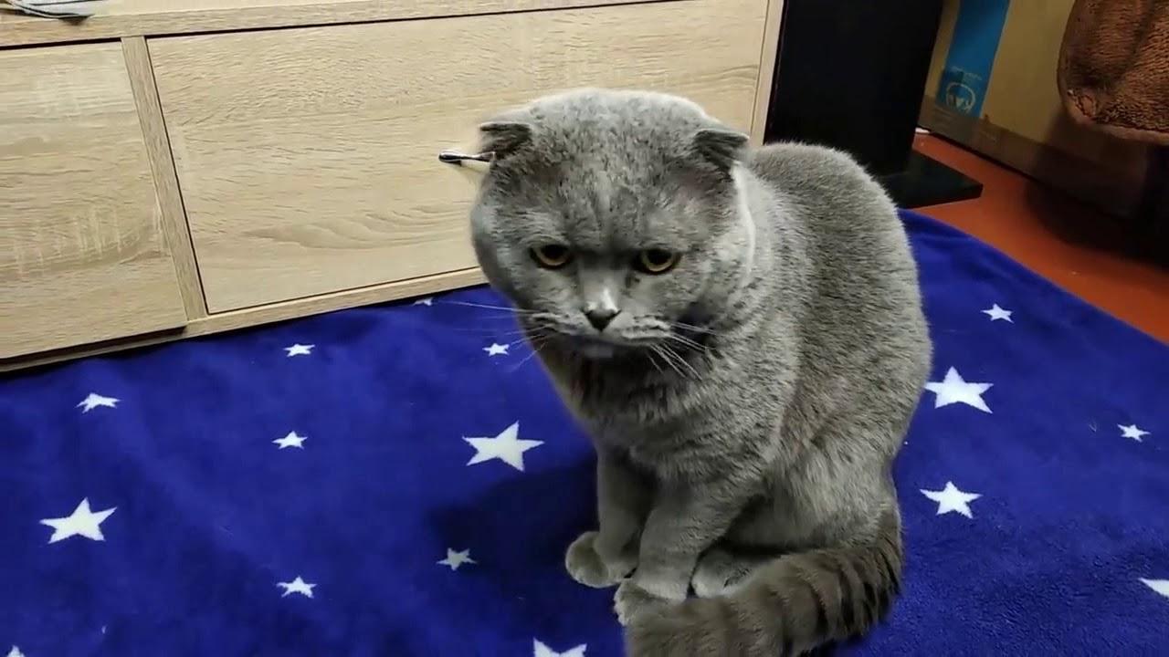 Suara Kucing KAWIN MEOW MEOW! Bikin Kalian Ngakak Terbahak bahak