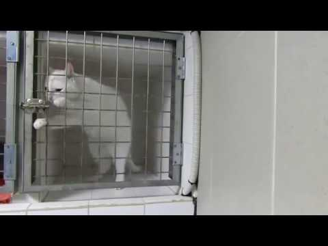 Cat escapes from the vet clinic!