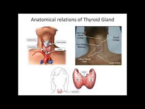 Thyroid Fine Needle Aspiration (TFNA) - YouTube