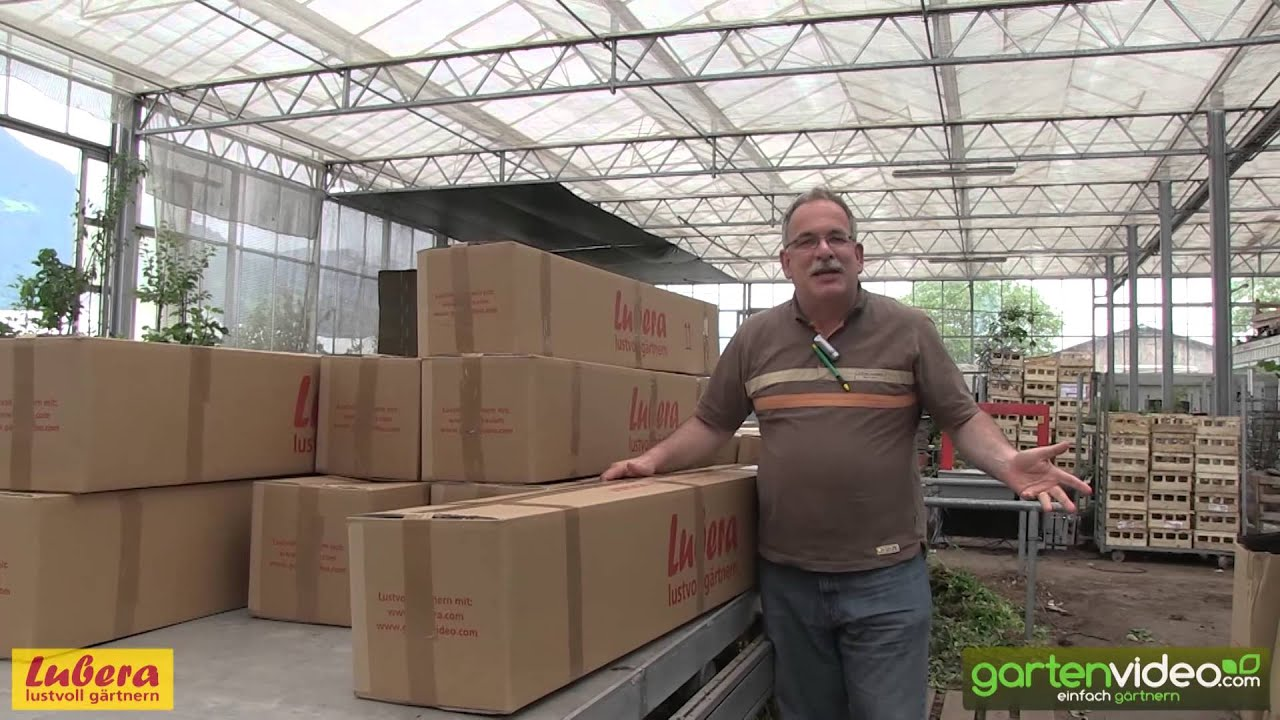 Lubera Pflanzenversand Richtige Verpackung Für Ihre Pflanze Youtube